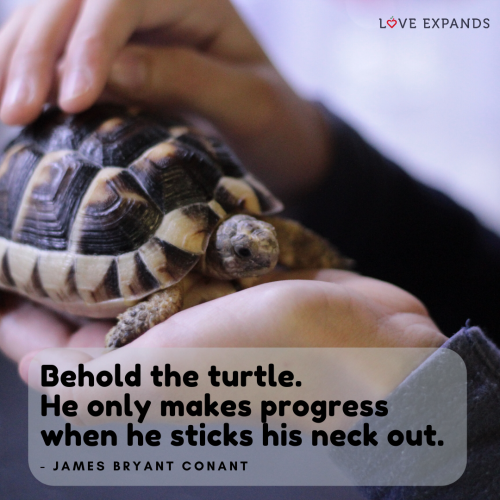 Behold the turtle…
