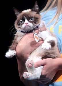 Best quotes by Grumpy Cat
