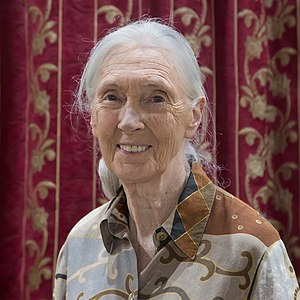 Best quotes by Jane Goodall