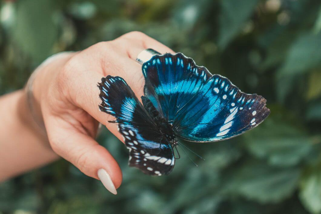 A life coach holding a blue butterfly on her index finger