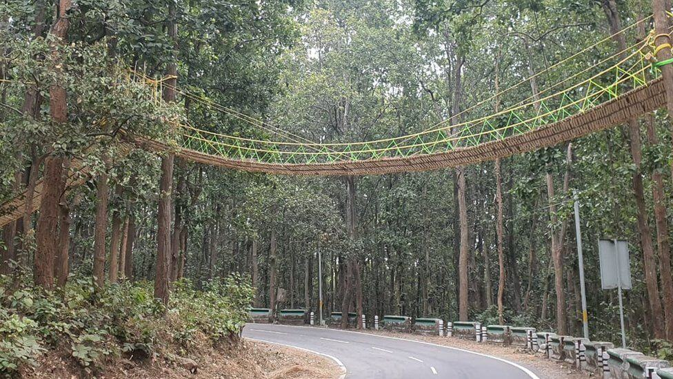 Forest officials have built a unique bridge for reptiles and other small animals to cross a busy highway in India's mountainous Uttarakhand state.