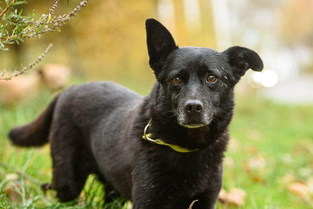 Blind, 12-year-old Gary found his way home after escaping from his adopted owner.