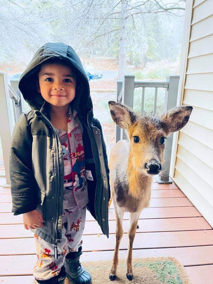 A deer friend: 4-year-old boy makes an unlikely companion