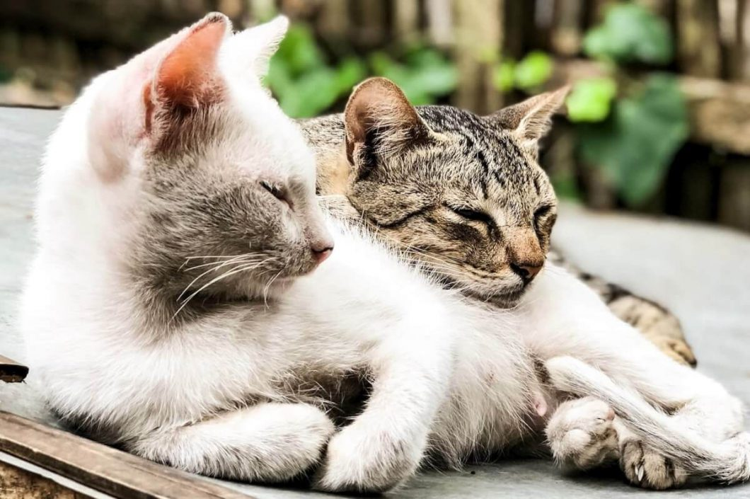 Two cats laying down next to one another