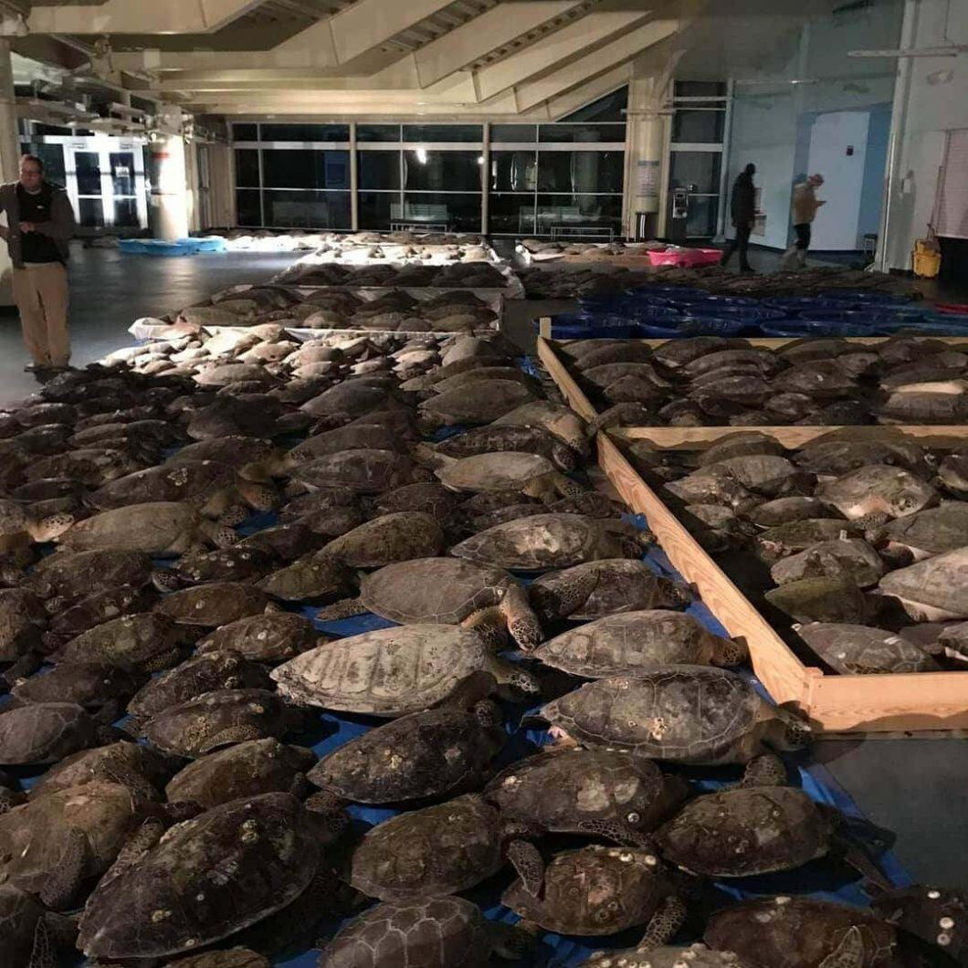 The record low temperatures during a history-making winter storm in Texas led sea turtles into peril, but local volunteers worked hard to ensure that they were taken somewhere safe.