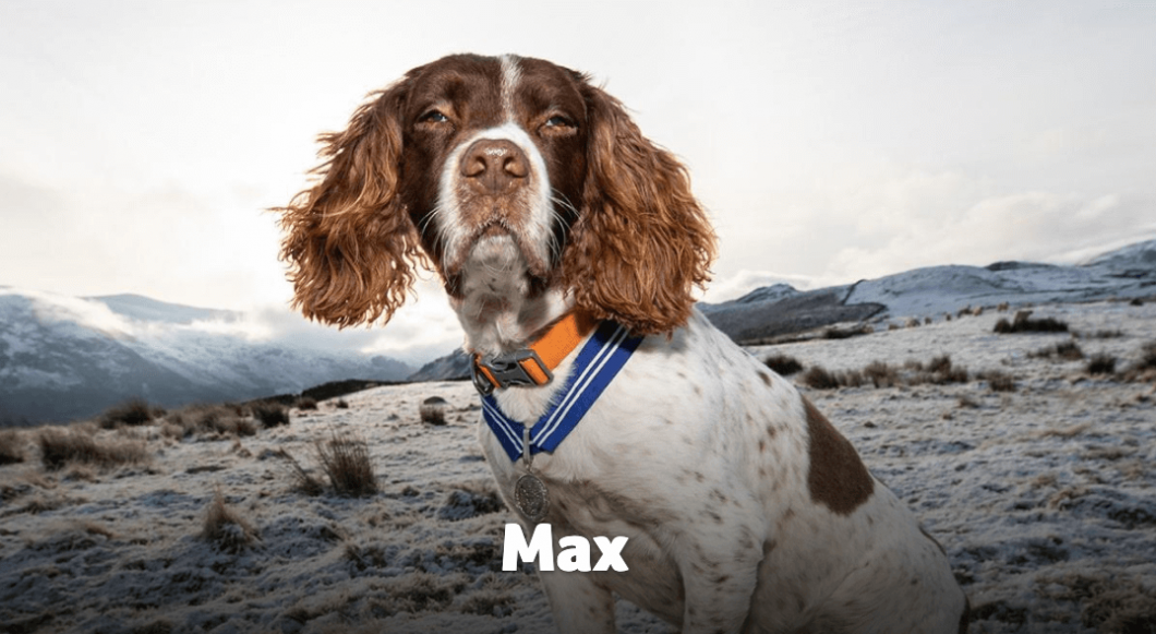 Thirteen-year-old Max is the first ever pet to receive the PDSA Order of Merit since its inception in 2014. Watch his inspiring story