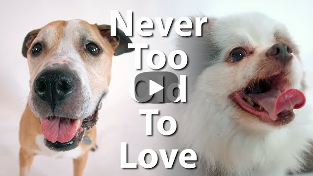 Never Too Old To Love: Music Video About Lovable Senior Dogs