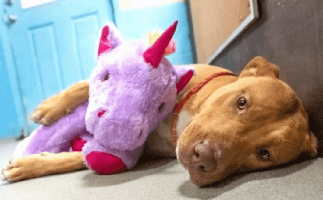 Sisu rests with the purple unicorn, which an officer bought for him upon discovering the stray and hearing of its attempts at theft.