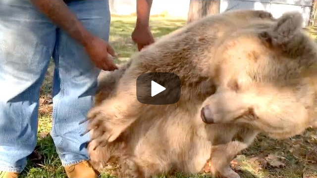 Bear Recognizes This Man & Her Reaction Will Warm Your Heart