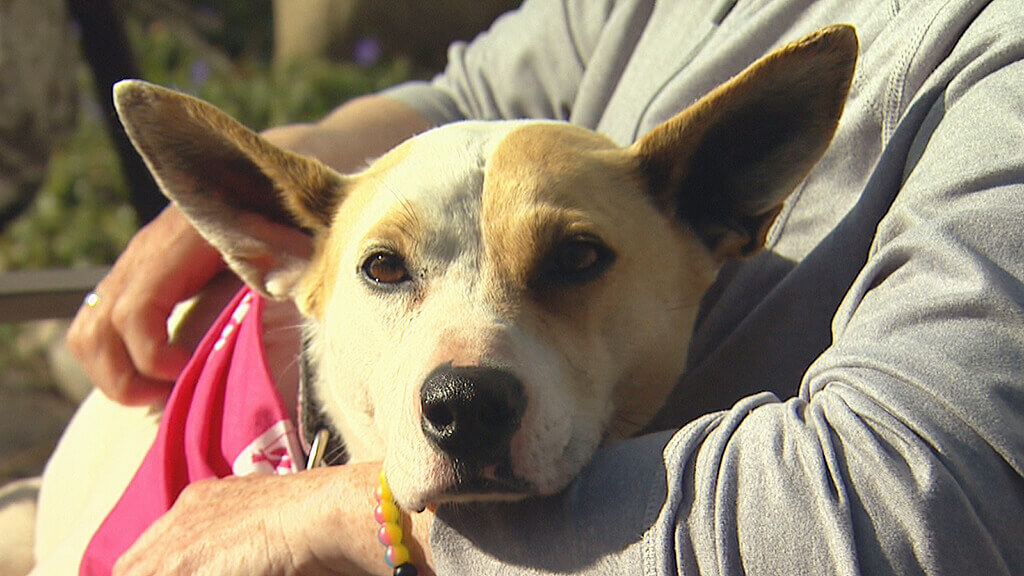Lost Dog Reunited with Owner Five Years Later