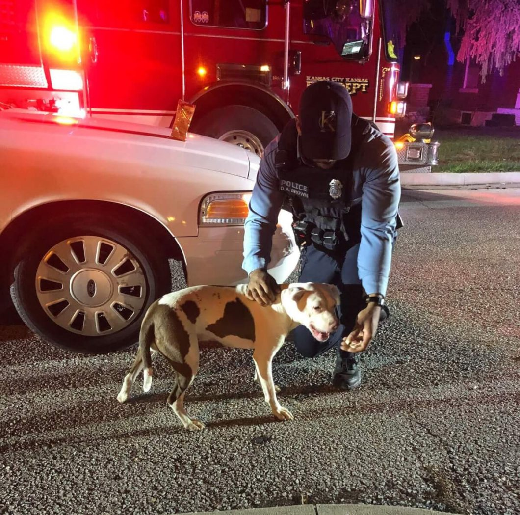 Thanks to this smart and loyal canine, and neighbors who paid attention to a plea for help, the dog saves his owner's life.