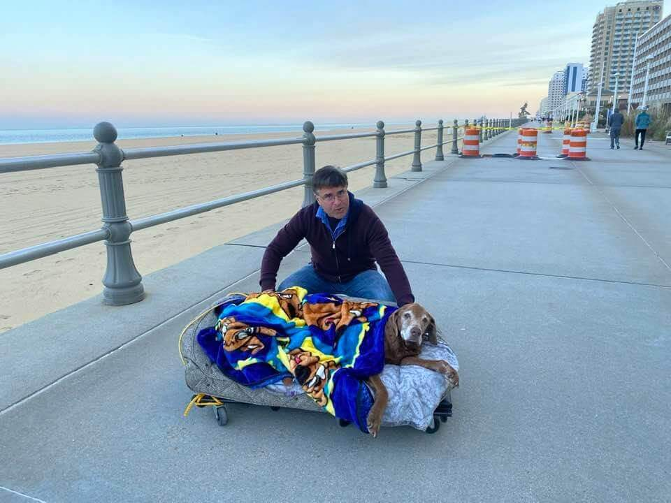 Family builds mobile bed for 16-year-old senior dog so she can visit the beach