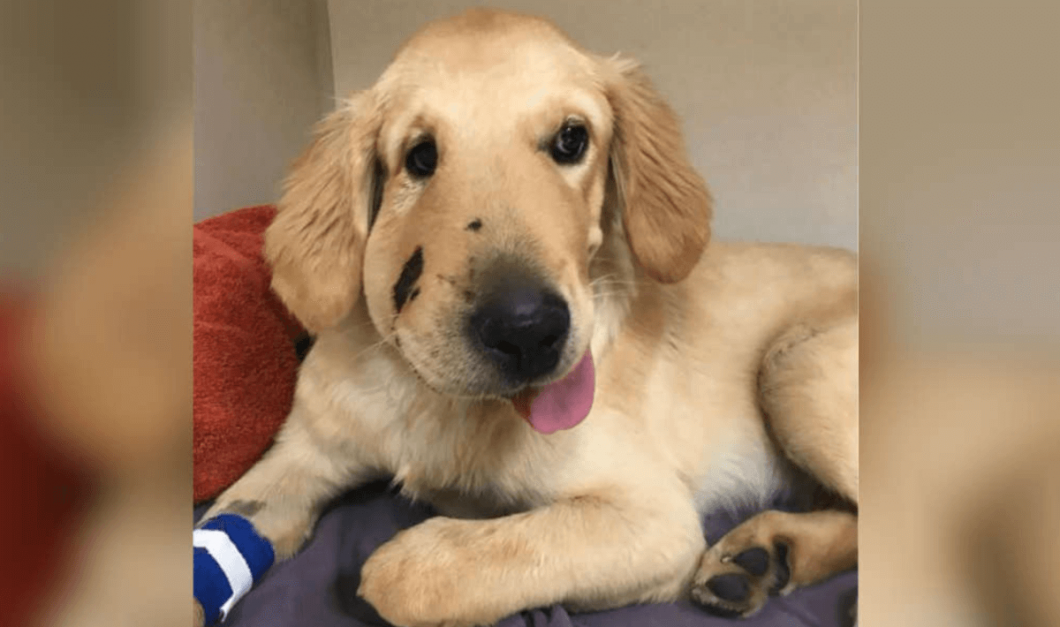 puppy saves owner from rattlesnake