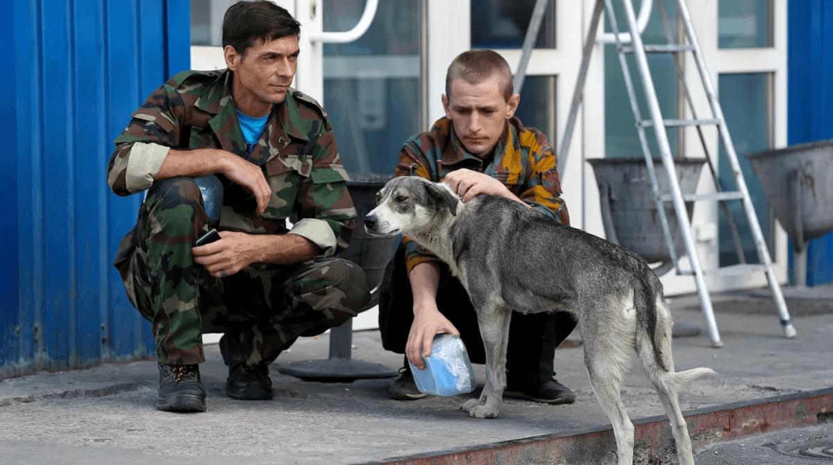 Chernobyl's abandoned dogs