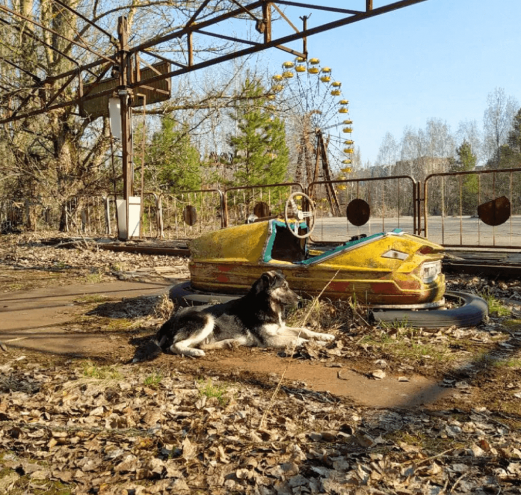 Chernobyl's abandoned dogs
