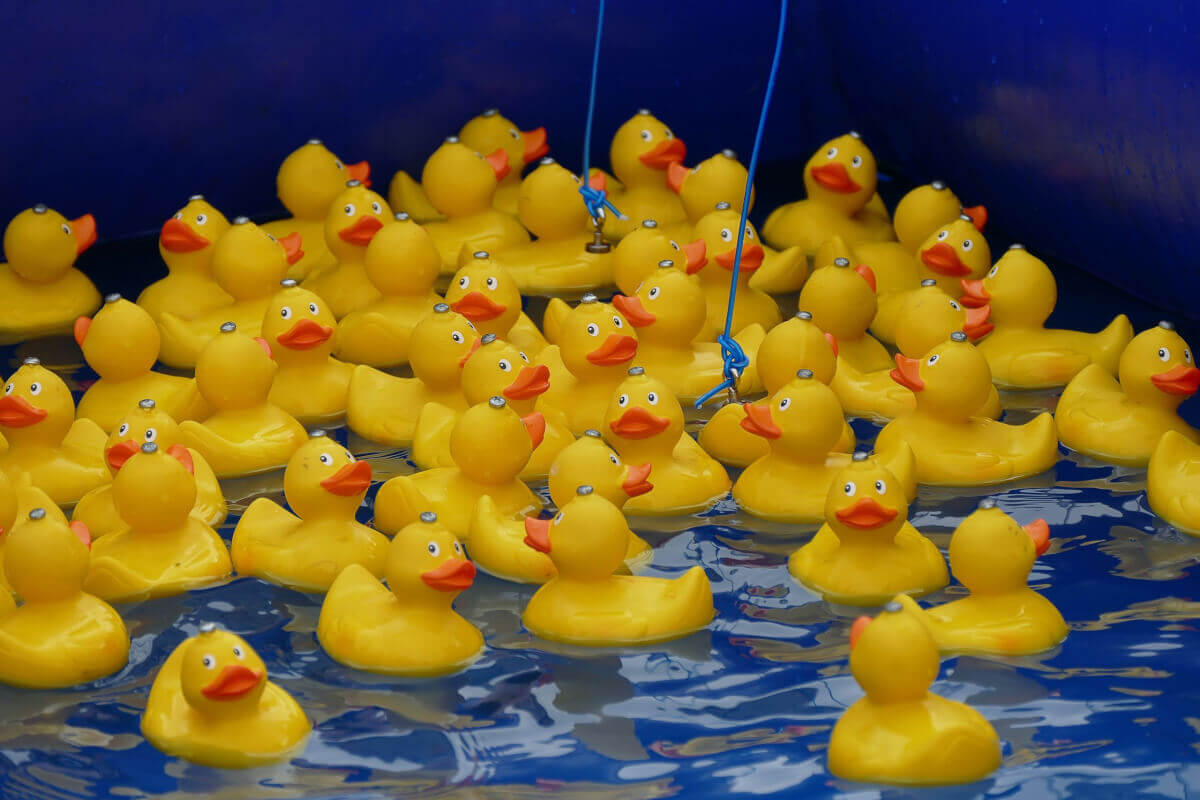 Yellow rubber duckies floating in the sea