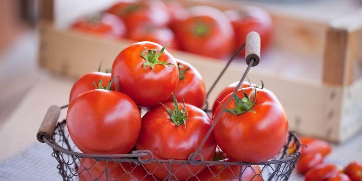 A basket of bright red tomatoes