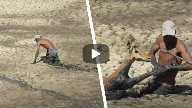 Local Hero Uses The Last Of His Strength To Pull Up This Animal's Leg & Save It