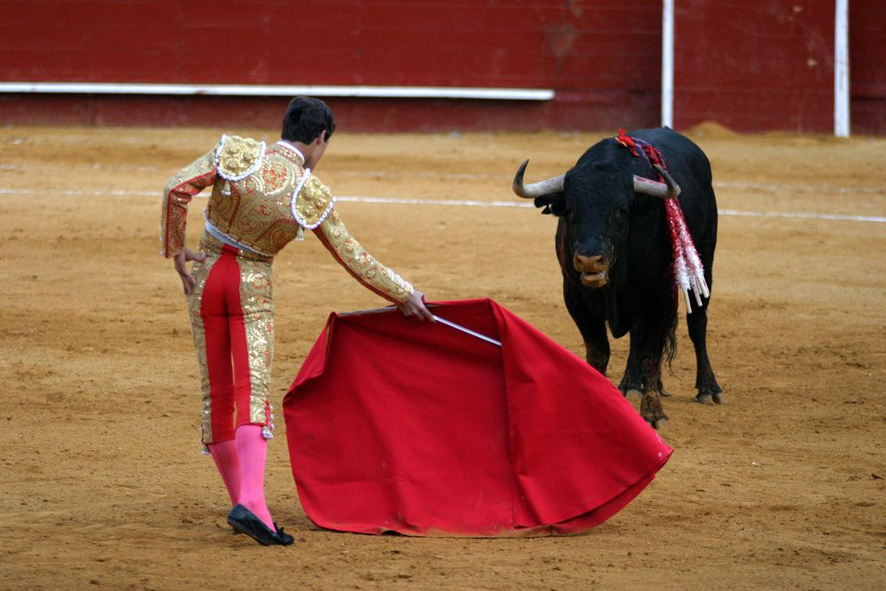 The color red doesn't really make bulls angry; they are color-blind
