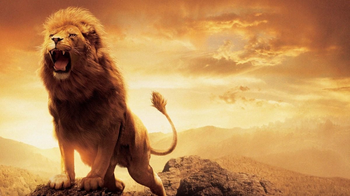 A lion can roar as loud as 114 decibels, roughly 25 times louder than a gas-powered lawnmower.