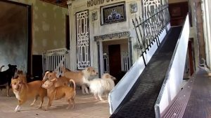Two-Story Indoor Mansion for her Pups