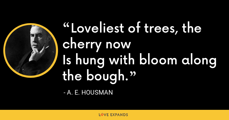 Loveliest of trees, the cherry nowIs hung with bloom along the bough. - A. E. Housman