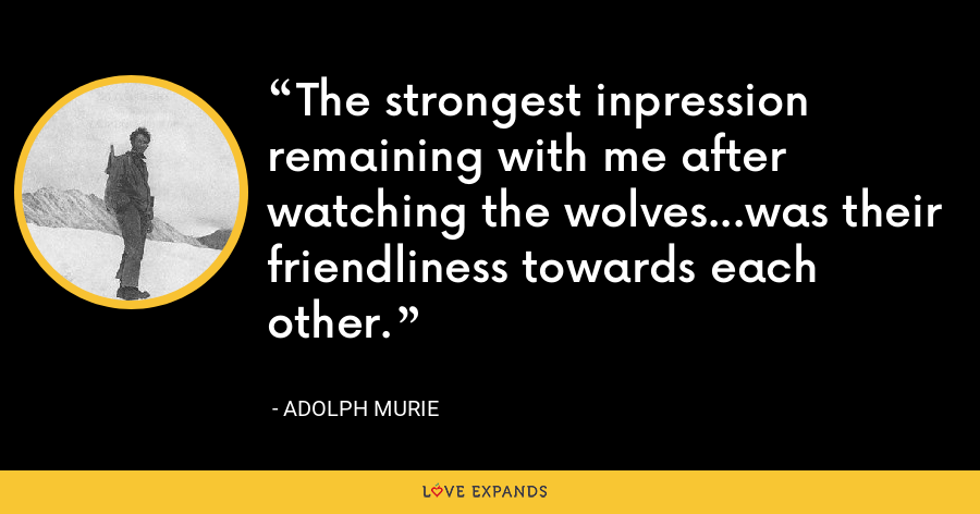 The strongest inpression remaining with me after watching the wolves...was their friendliness towards each other. - Adolph Murie