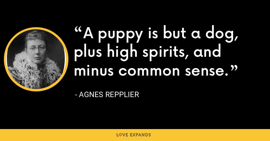 A puppy is but a dog, plus high spirits, and minus common sense. - Agnes Repplier