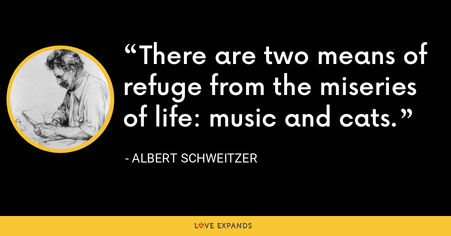 There are two means of refuge from the miseries of life: music and cats. - Albert Schweitzer
