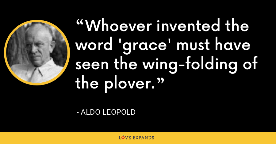 Whoever invented the word 'grace' must have seen the wing-folding of the plover. - Aldo Leopold