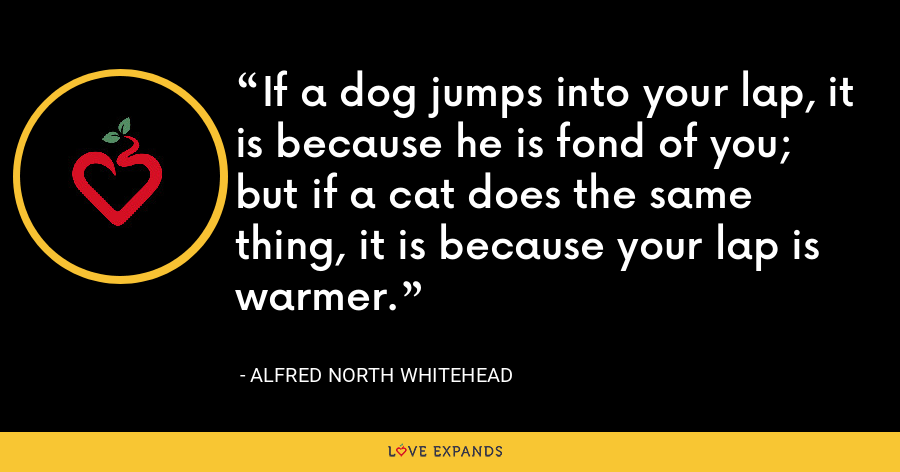 If a dog jumps into your lap, it is because he is fond of you; but if a cat does the same thing, it is because your lap is warmer. - Alfred North Whitehead