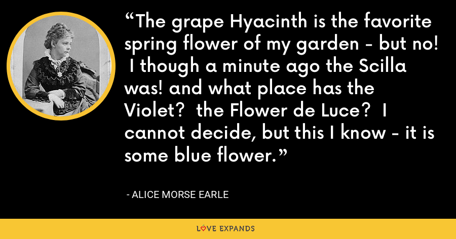 The grape Hyacinth is the favorite spring flower of my garden - but no!  I though a minute ago the Scilla was! and what place has the Violet?  the Flower de Luce?  I cannot decide, but this I know - it is some blue flower. - Alice Morse Earle