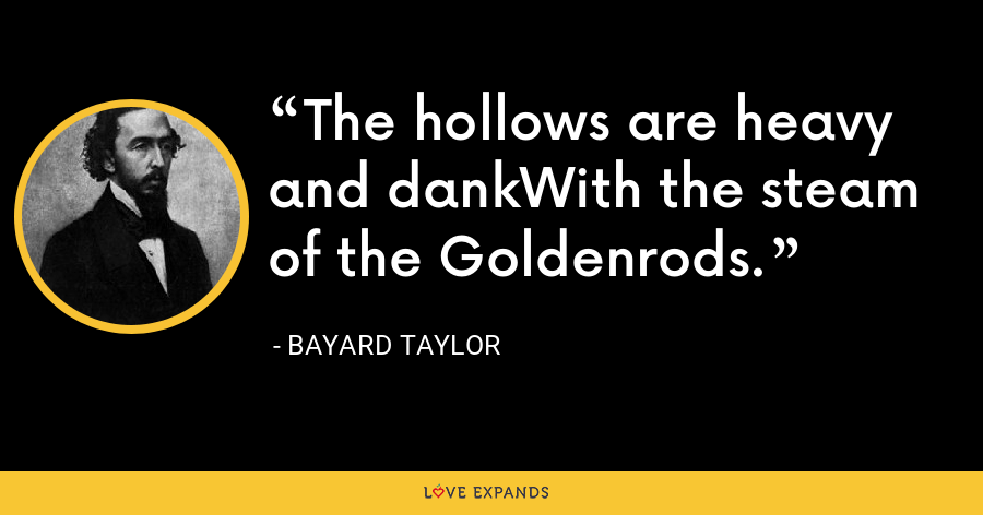 The hollows are heavy and dankWith the steam of the Goldenrods. - Bayard Taylor