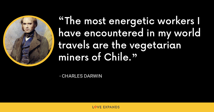 The most energetic workers I have encountered in my world travels are the vegetarian miners of Chile. - Charles Darwin