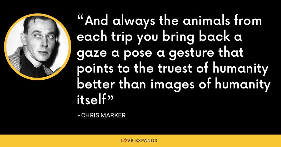 And always the animals from each trip you bring back a gaze a pose a gesture that points to the truest of humanity better than images of humanity itself - Chris Marker