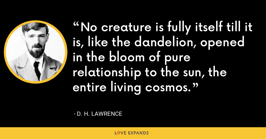 No creature is fully itself till it is, like the dandelion, opened in the bloom of pure relationship to the sun, the entire living cosmos. - D. H. Lawrence