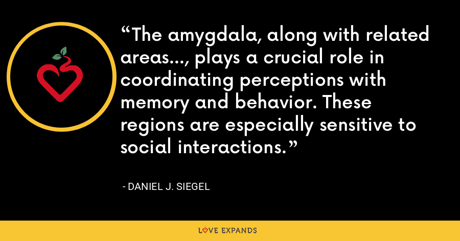 The amygdala, along with related areas..., plays a crucial role in coordinating perceptions with memory and behavior. These regions are especially sensitive to social interactions. - Daniel J. Siegel