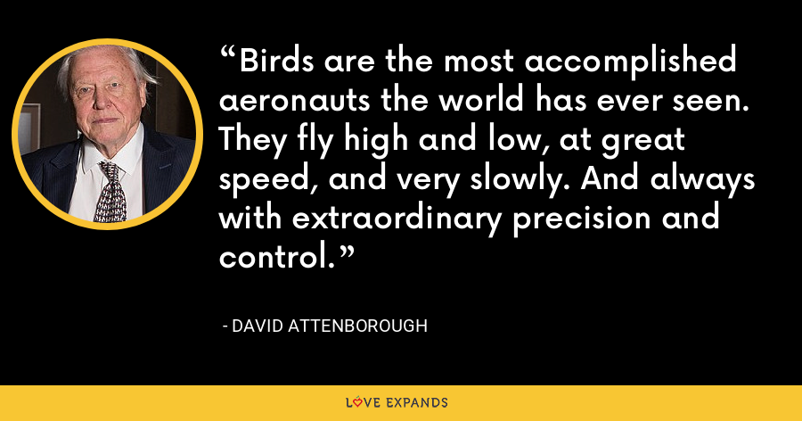 Birds are the most accomplished aeronauts the world has ever seen. They fly high and low, at great speed, and very slowly. And always with extraordinary precision and control. - David Attenborough