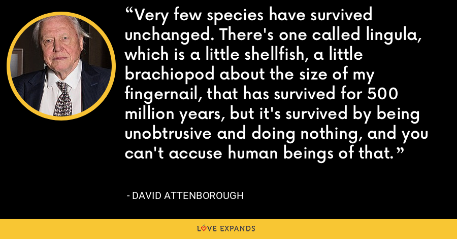 Very few species have survived unchanged. There's one called lingula, which is a little shellfish, a little brachiopod about the size of my fingernail, that has survived for 500 million years, but it's survived by being unobtrusive and doing nothing, and you can't accuse human beings of that. - David Attenborough
