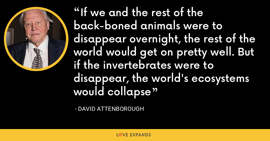 If we and the rest of the back-boned animals were to disappear overnight, the rest of the world would get on pretty well. But if the invertebrates were to disappear, the world's ecosystems would collapse - David Attenborough