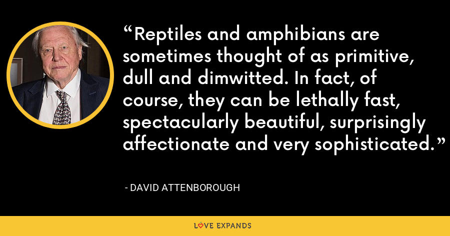 Reptiles and amphibians are sometimes thought of as primitive, dull and dimwitted. In fact, of course, they can be lethally fast, spectacularly beautiful, surprisingly affectionate and very sophisticated. - David Attenborough