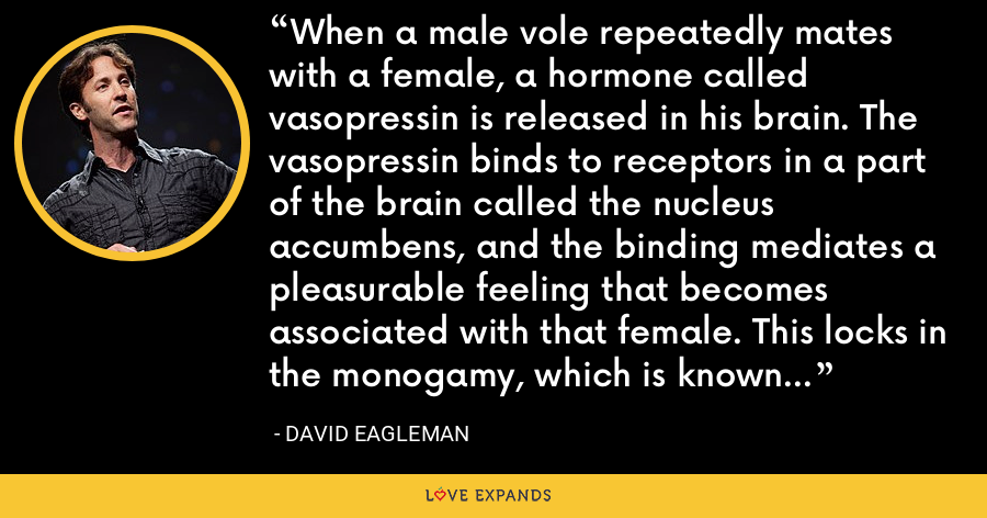 When a male vole repeatedly mates with a female, a hormone called vasopressin is released in his brain. The vasopressin binds to receptors in a part of the brain called the nucleus accumbens, and the binding mediates a pleasurable feeling that becomes associated with that female. This locks in the monogamy, which is known as pair-bonding. If you block this hormone, the pair-bonding goes away. - David Eagleman