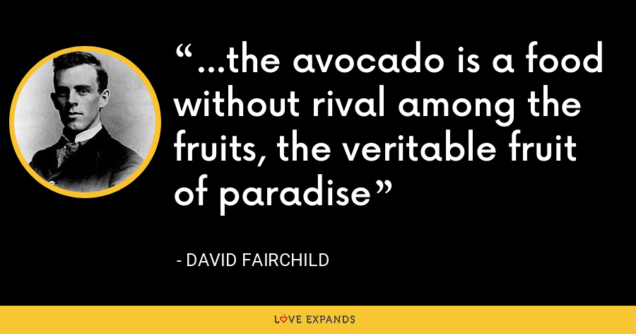 ...the avocado is a food without rival among the fruits, the veritable fruit of paradise - David Fairchild