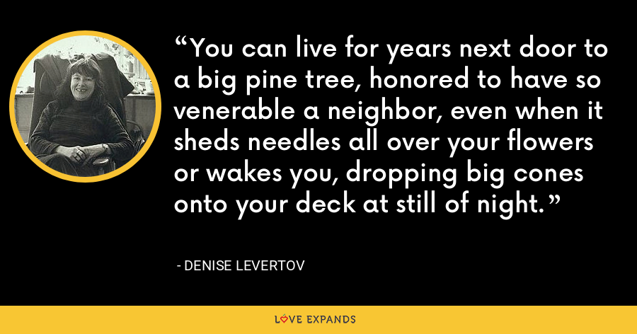 You can live for years next door to a big pine tree, honored to have so venerable a neighbor, even when it sheds needles all over your flowers or wakes you, dropping big cones onto your deck at still of night. - Denise Levertov