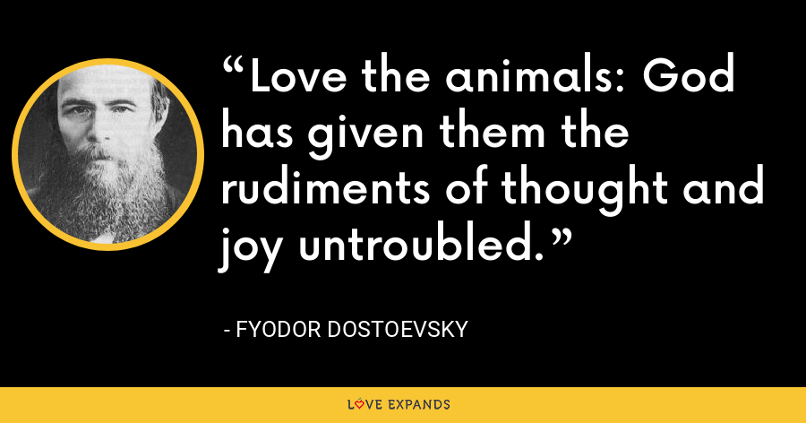 Love the animals: God has given them the rudiments of thought and joy untroubled. - Fyodor Dostoevsky