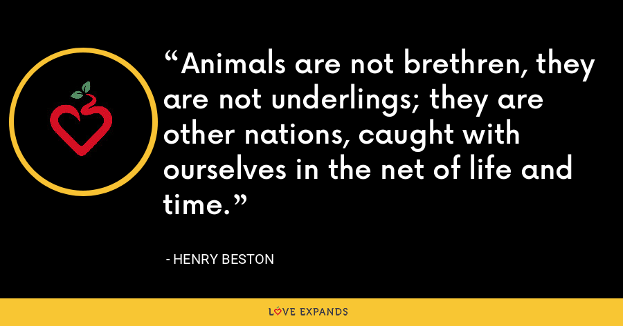 Animals are not brethren, they are not underlings; they are other nations, caught with ourselves in the net of life and time. - Henry Beston