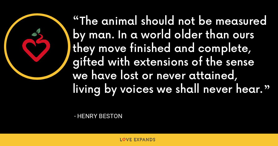 The animal should not be measured by man. In a world older than ours they move finished and complete, gifted with extensions of the sense we have lost or never attained, living by voices we shall never hear. - Henry Beston