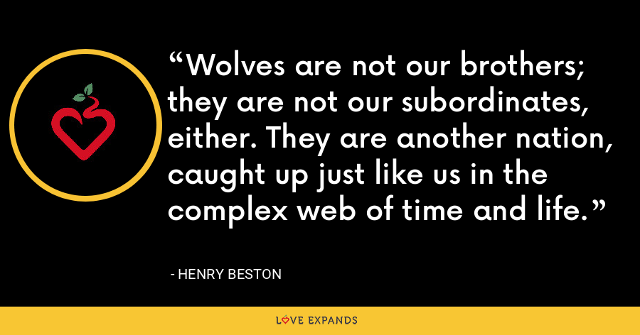 Wolves are not our brothers; they are not our subordinates, either. They are another nation, caught up just like us in the complex web of time and life. - Henry Beston