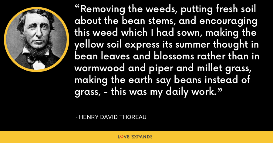 Removing the weeds, putting fresh soil about the bean stems, and encouraging this weed which I had sown, making the yellow soil express its summer thought in bean leaves and blossoms rather than in wormwood and piper and millet grass, making the earth say beans instead of grass, - this was my daily work. - Henry David Thoreau