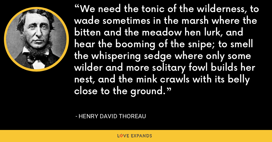 We need the tonic of the wilderness, to wade sometimes in the marsh where the bitten and the meadow hen lurk, and hear the booming of the snipe; to smell the whispering sedge where only some wilder and more solitary fowl builds her nest, and the mink crawls with its belly close to the ground. - Henry David Thoreau